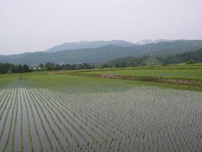水田越しに望む葉山